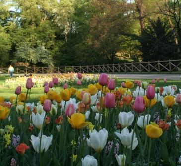 I bulbi a fioritura primaverile arredare la casa con - Bulbi estivi quando piantarli ...