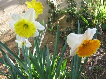 I bulbi a fioritura primaverile arredare la casa con for Fiori primaverili da giardino