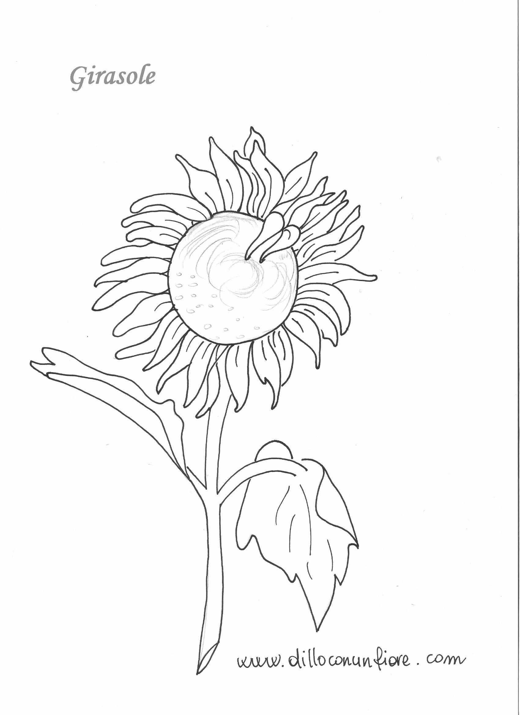 Fiori da colorare per natale 2015 mimose da colorare per for Disegni di girasoli da colorare