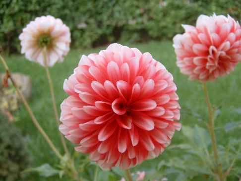 Dillo Con Un Fiore: Ricette Con I Fiori E Non Solo!