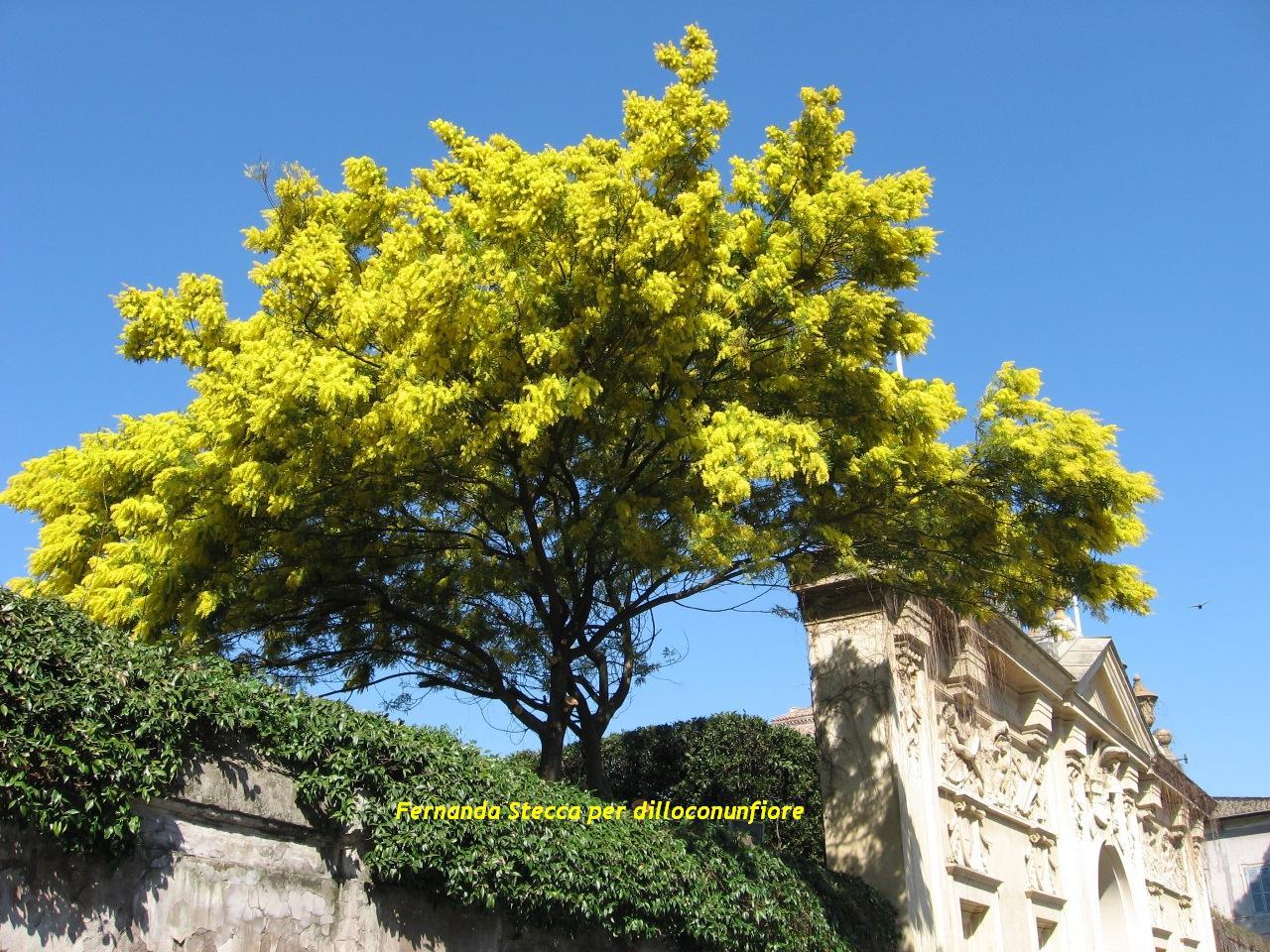 Festa della Donna - Mimose, foto, poesie eventi mostre