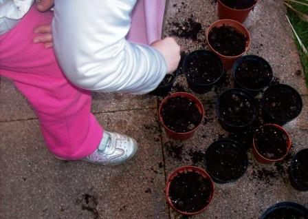 Giardinaggio consigli per aiuole balconi e giardini per for Piantare pomodori