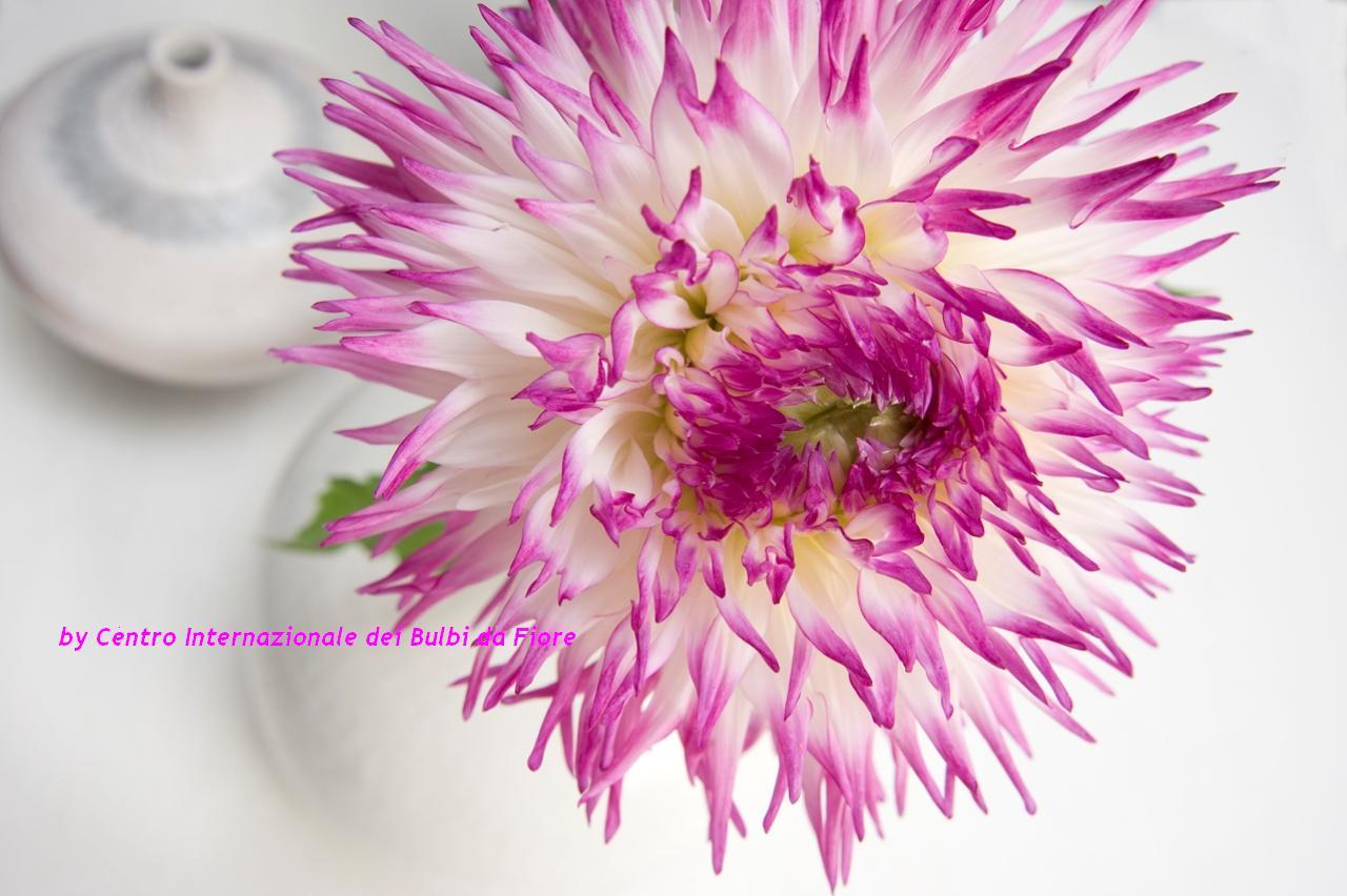 Sfondi per il desktop a tema floreale sfondi di natale for Immagini sfondo desktop primavera