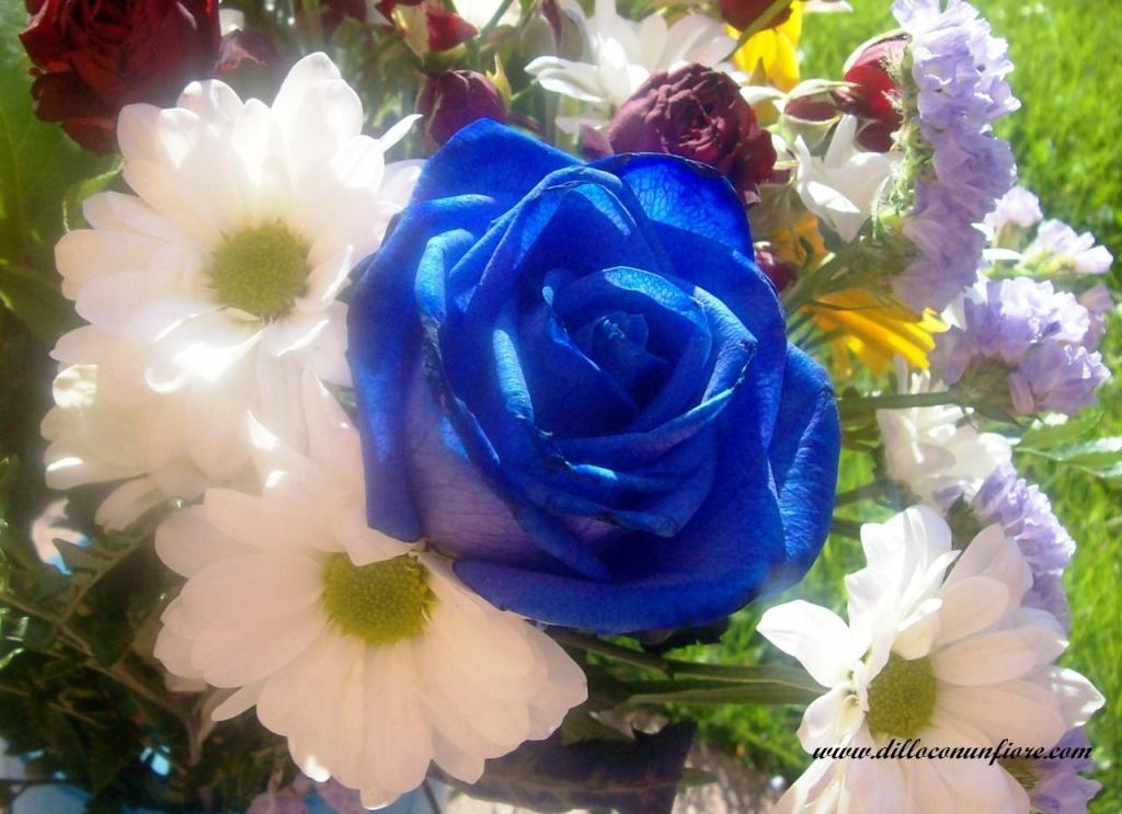 Sfondi per il desktop a tema floreale sfondi di natale for Sfondi primaverili